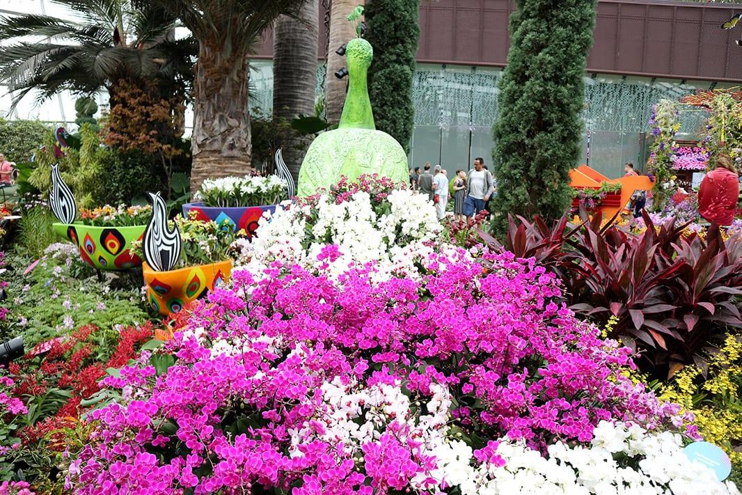 fiori e orchidee compongono la coda di un pavone, gardens by the bay, singapore