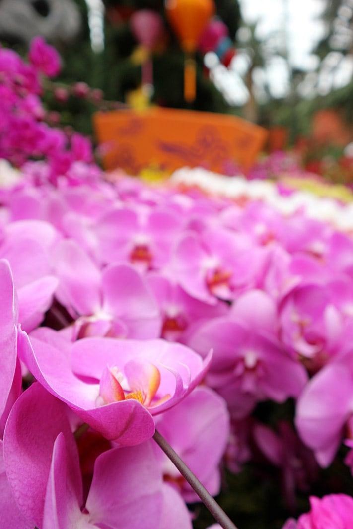 dettaglio di orchidee al garden by the bay, singapore